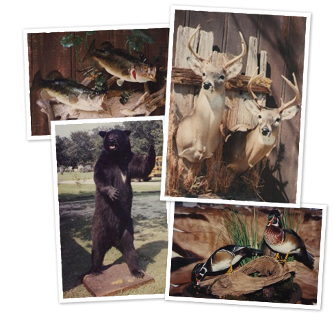 Baton Rouge Taxidermy in Louisiana