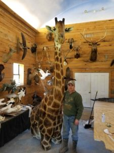 Giraffe Taxidermy