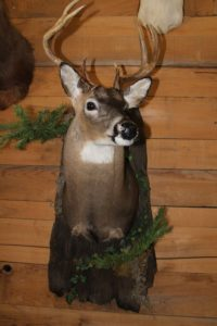 Deer Taxidermy Baton Rouge