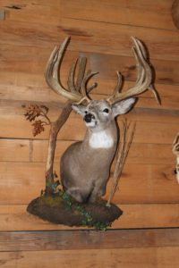 Deer Taxidermist Louisiana