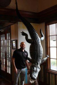 Large Aligator Taxidermy